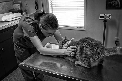 veterinarian photo